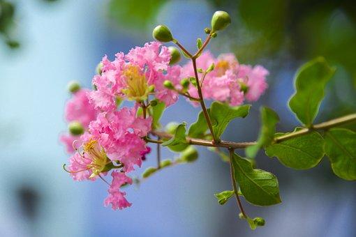 Flower Wall En, Nettles Are Full Of Flowers, Acorns