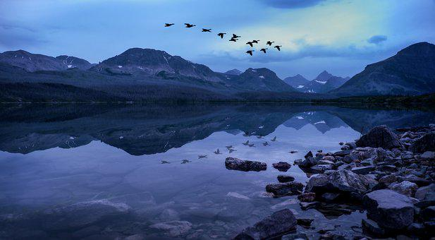Glacier National Park, Geese Over Lake, Geese, Migrate