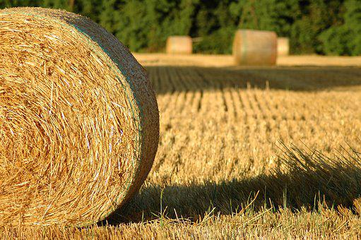 Bale Of Straw, Summer, Hay, Agriculture, Harvest