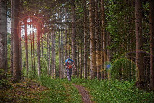 Forest, Hiking, Nature, Landscape, Path, Trees, Trail