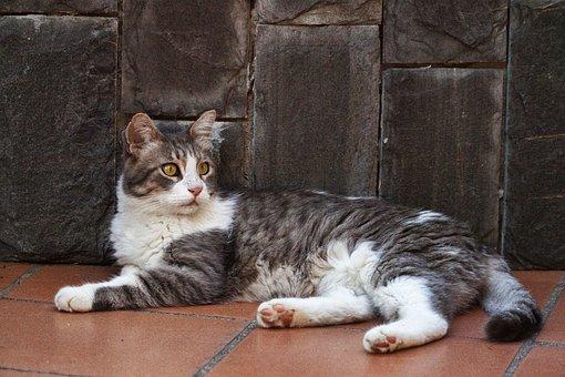 Cat, Kitten, Animal, Feline, Adorable, Fur, Eyes