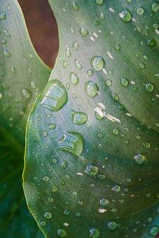 Rain, Leaves, Green, Raindrop, Leaf Veins, Water