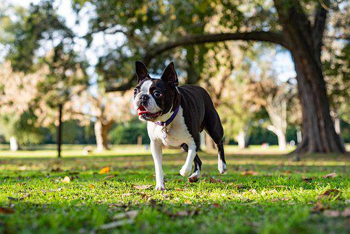 Dog, Pet, Animal, Love, Puppy, Canine, Cute, Pug