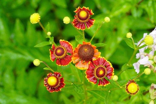Flower, Nature, Flowers, Plants, Summer, Spring, Macro