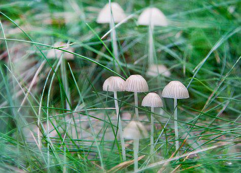Mushrooms, Forest, Moss, Nature, Autumn, Toxic, Spotted