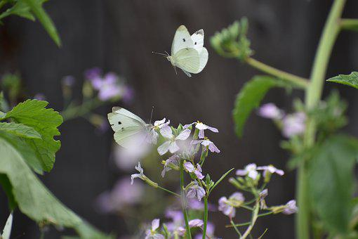 Two, Butterflies, Nature, Animal, Flower, Summer