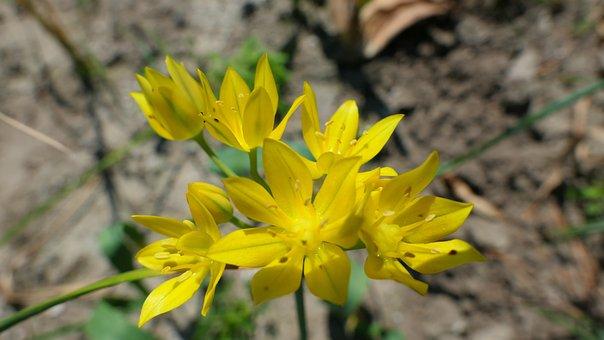 Flower, Yellow, Spring, Plant, Summer, Garden, Nature
