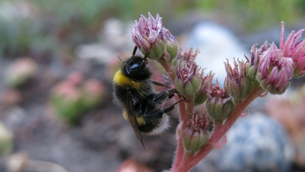 Hummel, Rest, Fly, Insect, Nature