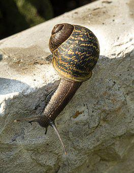 Macro, Snail, Nature, Slowly, Animal, Shell, Garden