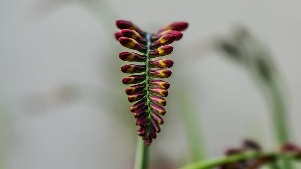 Plant, Flower, Nature, Bloom, Blossom, Pink, Summer
