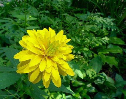 A Yellow Flower, Flower, Yellow, Plant, Summer, Flora