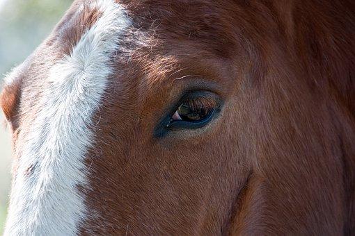 Horse, Detail, Eyes, Eye, Animal, Portrait, Stallion