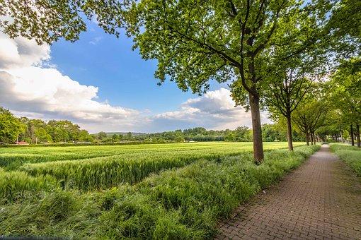 Lane, Rural, Landscape, Nature, Summer, Sky, Path