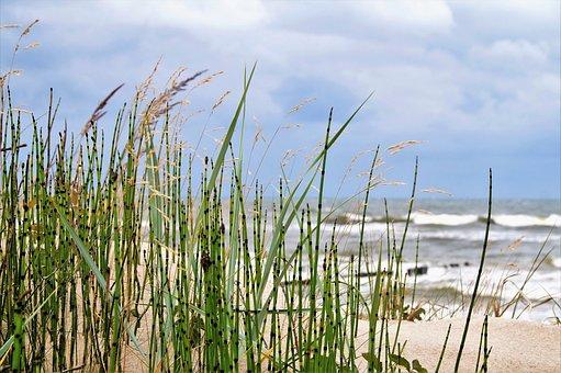 Sea, Coast, Dune, Sand, Reed, Water, The Baltic, Nature