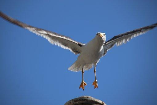 Seagull, Wings, Flight, Sky, Freedom, Birds, White
