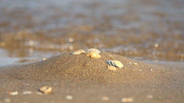 Seashell, Sand, Beach, Sea, Souvenir, Summer