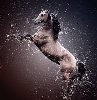 Arabs, Stallion, Thoroughbred Arabian, Horse