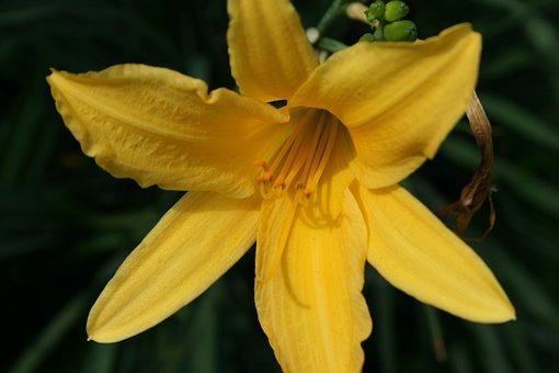 Flower, Yellow, Flowers, Spring, Summer, Flora, Plant
