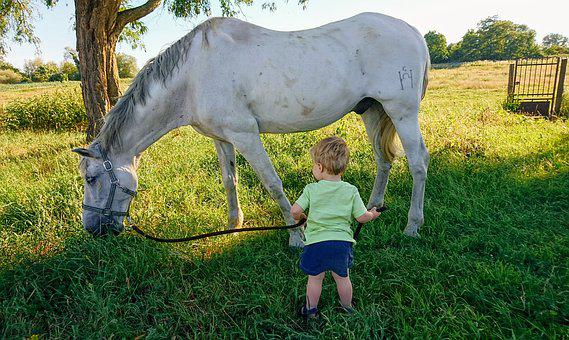Horse, Child, Sun, Grass, Summer, Colorful, Nature