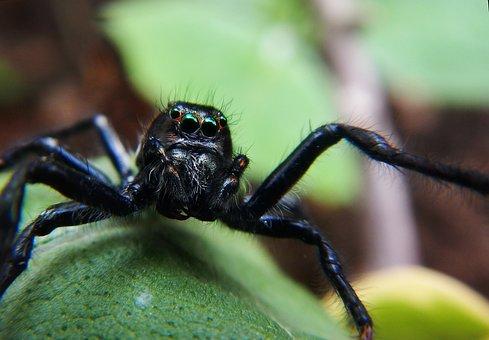 Spider, Web, Tarantula, Arachnid, Nature, Horrifying