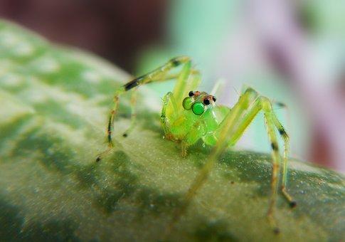Spider Magnolia, Spider, Predator, Arachnid, Web, Trap