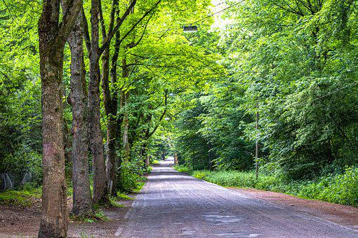 Avenue, Road, Tree, Nature, Away, Tree Lined Avenue
