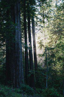 Nature, Sunlight, Trees, Forrest, Sunset, Sunbeam