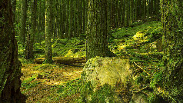 Forest, Green, Trees, Woods, Nature, Landscape