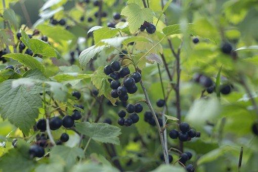 Berry, Summer, Freshness, Tasty, Health, Vitamins, Joy