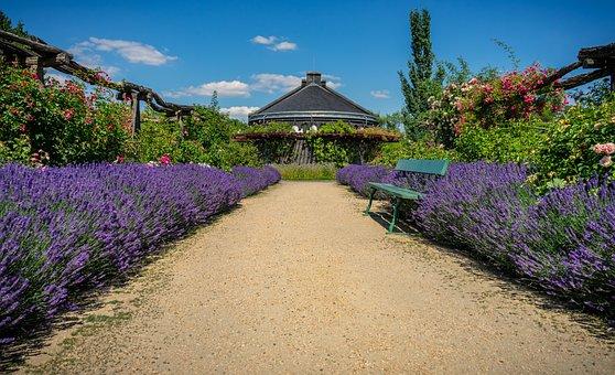 Garden, Park, Rose Garden, Lavender, Roses, Bank