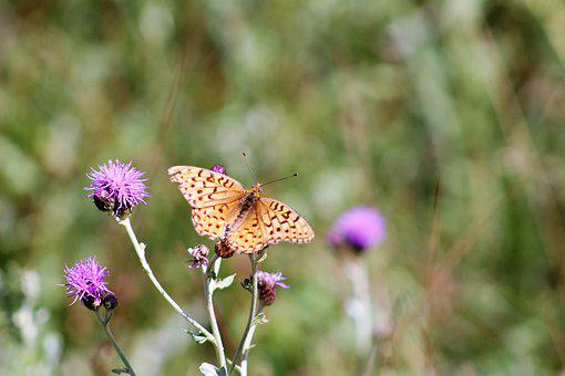 Butterfly, Monarch, Insect, Nature, Animal, Colorful
