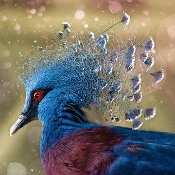 Crown Pigeon, Bird, Colorful, Exotic, Animal World