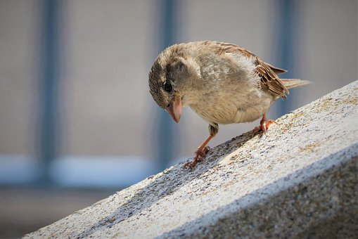 Animal, Bird, Sparrow, Sperling, Feather, Plumage