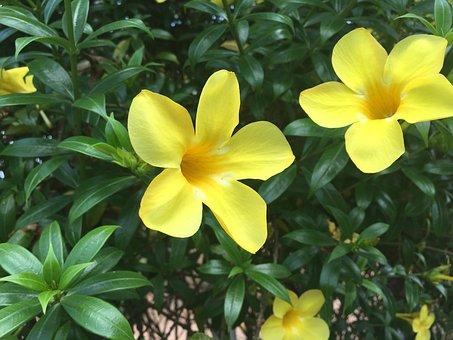 Yellow Flower, Fresh, Natural, Garden, Fence, Outdoor