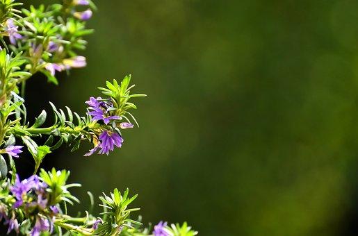 Flowers, Garden, Blue Flower Fan, Plant, Nature, Green