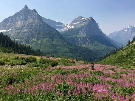 Mountains, Meadow, Glacier National Park, Landscape
