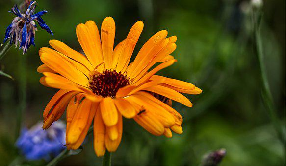 Flower, Blossom, Bloom, Yellow, Orange, Nature, Plant
