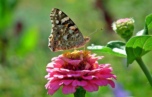 Butterfly, Insect, Flowers, Tin, Summer, Nature, Macro