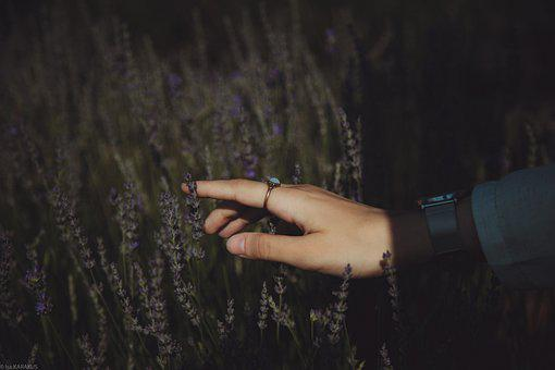 El, Nature, Lavender, Hands, People, Woman, Girl, Young