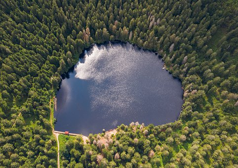 Lake, Brine, Nature, Forest, Trees, Water, Mirroring