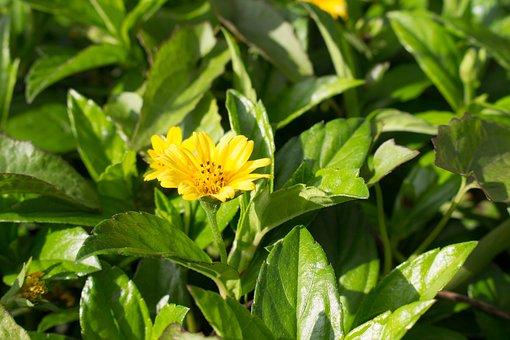 Flowers, Nature, Flower, Garden, Open, Pink, Spring