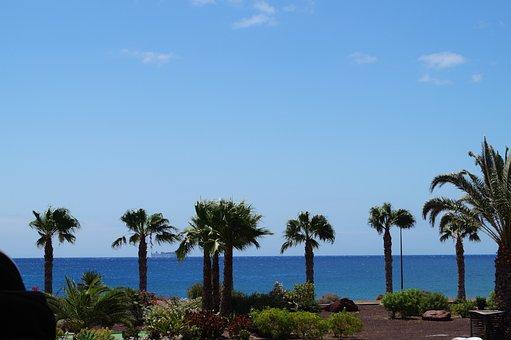 Fuerteventura, Palm Trees, Vacations, Summer, Sea