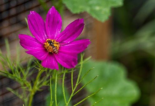Flower, Blossom, Bloom, Purple, Green, Nature, Plant