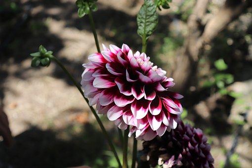 Flower, Chichewa Best Pictures, Potato Blossom, Green
