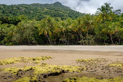 Daintree, Australia, Queensland, Rainforest, Beach