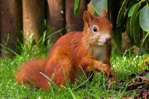 Animal World, Squirrel, Rodent, Foraging, Attention