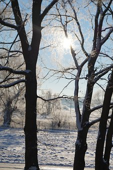 Trees, Snow, Winter, Wintry, Sunbeam, White, Sunny