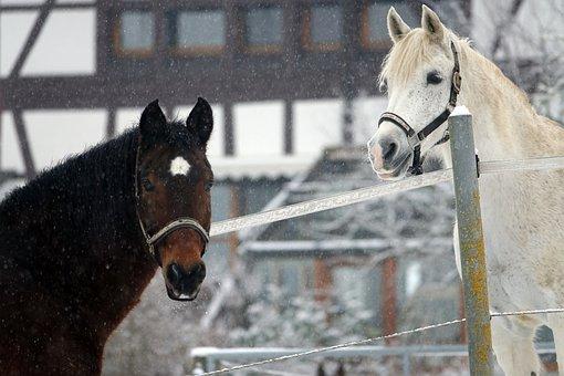 Horses, Snow, Farmhouse, Truss, Horse