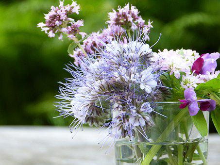 Bees, Bee Friend, Phacelia, Tufted Flower, Glass, Water