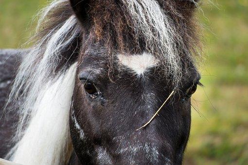 Horse, Eyes, View, Head, Mane, Pony, Look, Horse Head